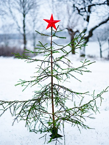 - The City Sage: Christmas Tree Style: Bare And Beautiful