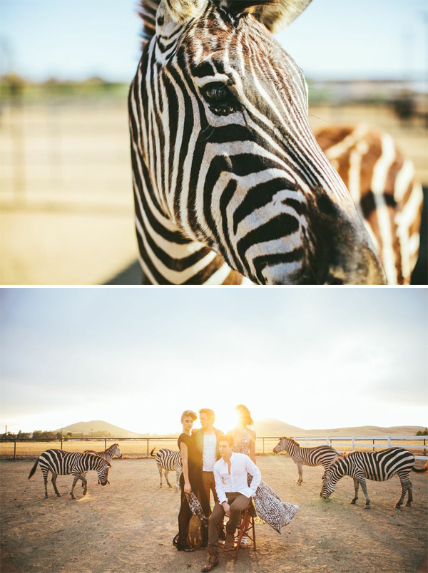 Zebra photo shoot