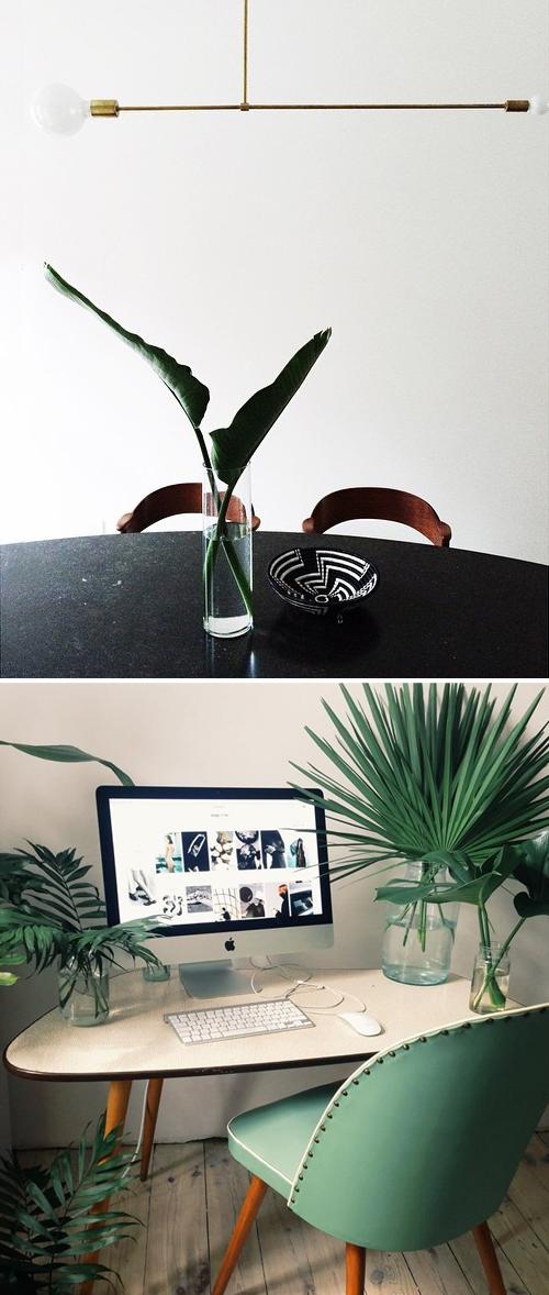 Tropical plant decor